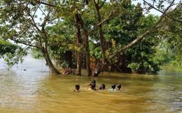 Trẻ vùng lụt Hà Nội hồn nhiên biến đường làng thành bãi tắm