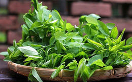Rau ngót - Cây rau, cây thuốc quý bạn có thể ăn hàng ngày mà chưa biết hết công dụng