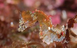 Tìm ra sinh vật mới: Trông như con lợn biết bơi nhưng tuyệt đẹp, và ai cũng bất ngờ vì kích cỡ của nó