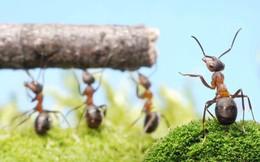 Sau này có muốn lười biếng thì hãy lười có kế hoạch như loài kiến