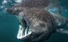 Theo dõi thành công loài cá bí ẩn nhất đại dương và tất cả là nhờ... người đi câu