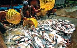 Công nghệ sản xuất cá tra mới của Việt Nam lên báo nước ngoài
