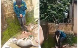Nam thanh niên trộm chó ở Thanh Hóa bị người dân bắt trói, treo xác chó lên cổ