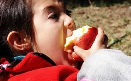 Đây là điều quan trọng nhất khi ăn táo nhưng chúng ta lại thường vô tình bỏ qua