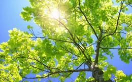 """""""Lá, nhánh hay là rễ - họ là ai trong cuộc đời của bạn?"""" – câu hỏi khiến ai nấy giật mình đang """"sốt"""" nhất hôm nay"""