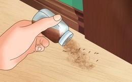 Với 6 gia vị này, bạn không những đuổi được côn trùng mà còn làm được thuốc sâu an toàn