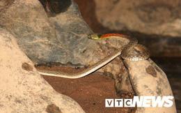 Bí ẩn hang đá ngập nước, 'thánh địa của loài rắn', cư dân không dám vào (Kỳ 3)