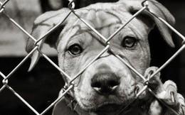 Thư cún con gửi quý ông bà đang ăn thịt chó: 'Chúng tôi không xin được hóa kiếp làm người'