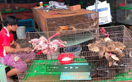 Cận cảnh tàn sát chim trời ở chợ chim lớn nhất Miền Tây