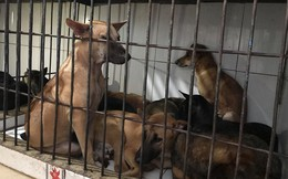 Tiểu thương chợ thịt chó nổi tiếng nhất Sài Gòn ôm thịt tháo chạy, khóa cửa nhà khi bị kiểm tra