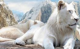 Những con vật đắt nhất thế giới (phần 2)
