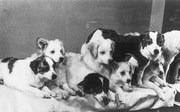 """Những chú chó nổi tiếng của Nga, trong đó có """"Hachiko của nước Nga"""""""
