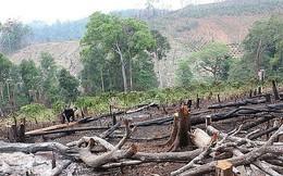 Khởi tố Trưởng phòng Nông nghiệp liên quan vụ phá rừng
