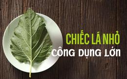 Kỳ diệu chiếc lá nhỏ trong vườn Việt: Thanh nhiệt, giải độc, sạch mạch máu, tiêu sưng viêm