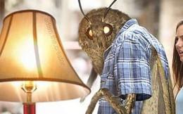 Nguồn gốc của loạt meme con bướm đêm và chiếc đèn đang khuynh đảo Internet