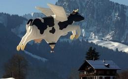[Photo Story] - 10 điều chỉ Thụy Sĩ mới có, số 4 quá kỳ quặc, số 6 cả trẻ con và người lớn đều thích