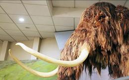 Nga chi 5,9 triệu USD cho nghiên cứu hồi sinh động vật tiền sử như trong Jurassic World