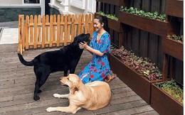 Tăng Thanh Hà khoe ảnh bên vườn rau và cún cưng mà cư dân mạng lại quan tâm điều này
