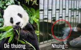 Những loài vật nhìn đáng yêu nhưng nguy hiểm vô cùng, có con đã làm chết người (P1)