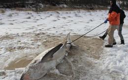 Nước Mỹ tê cứng trong 'bom bão tuyết': Người chết cóng, cá mập sốc nhiệt và hàng loạt ô tô 'biến mất'