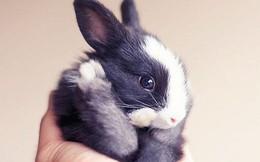 16 hình ảnh minh chứng thỏ là loài động vật đáng yêu nhất trên đời