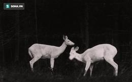 Công bố 9 bức ảnh làm nên lịch sử 130 năm của tạp chí lừng danh National Geographic