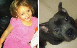 Mua chó Pit Bull về cho con gái làm bạn, người cha không ngờ rằng 5 ngày sau thảm kịch xảy đến với gia đình