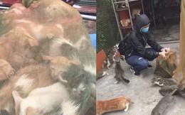 Người phụ nữ chi gần 20 triệu đồng cứu 130 chú mèo ra khỏi lò mổ ở Sài Gòn