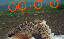 """""""Kẻ săn mồi"""" đỉnh nhất bầu trời đã lộ diện: 75% diều hâu, chim cắt và chim ưng đã phải bỏ mạng vì thứ này"""