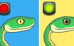 Trọn bộ bí kíp phân biệt một con rắn có độc hay không - học ngay để bớt hoảng sợ khi rắn bò vào nhà