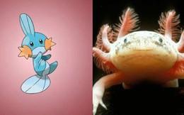 Đây là hình ảnh của 15 loài Pokemon ngoài đời thực, bạn biết được bao nhiêu loài?