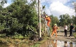 Trâu chửa lăn ra chết, lộ sự cố rò điện lưới ở con đường đông học sinh qua lại