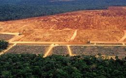 Tiết lộ gây sốc: Rừng Amazon đang bị hủy diệt với tốc độ chưa từng thấy trong 10 năm qua