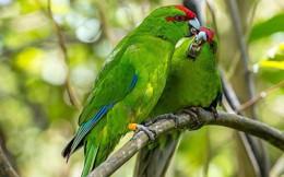 Thiên đường chim hoang dã lộng lẫy bậc nhất hành tinh chính là hòn đảo này