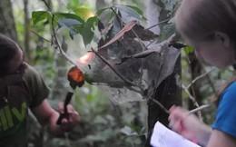 """Phát hiện ra loài ong bắp cày đáng sợ: """"Xác sống hóa"""" hoàn toàn một con nhện và biến nó thành thức ăn cho ấu trùng"""