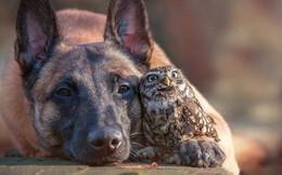 """Tan chảy với loạt ảnh về """"tình yêu mù quáng"""" của các con vật không cùng giống loài"""