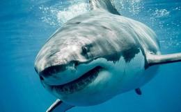 Điều gì giúp cá mập trở thành 'sát thủ đại dương'?
