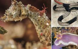 Có hơn 200 loài vật mới được tìm ra trong năm 2018, và đây là những sinh vật ấn tượng nhất