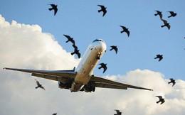 Tưởng chừng chỉ là ảo ảnh thông thường nhưng đây lại là giải pháp ngăn chim lạc vào sân bay vô cùng hiệu quả