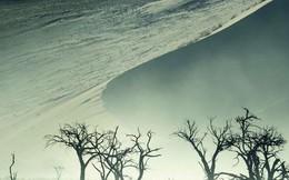 Những bức ảnh chứng minh rằng thiên nhiên hoang dã và toàn vẹn vẫn đang tồn tại trên Trái đất này