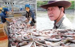 Vua cá Dương Ngọc Minh tìm lại danh tiếng đã mất