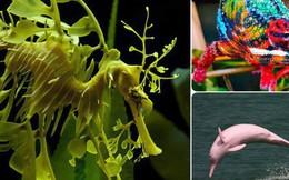 """Hóa ra trên đời có những loài vật siêu hiếm với vẻ đẹp """"vô lý"""" đến nỗi ai cũng ngỡ là Photoshop"""