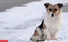 Cảm động chú chó chờ chủ ròng rã 6 tháng dưới cái lạnh -30 độ