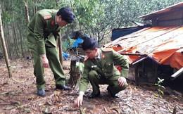 Phát hiện cả 'kho' bom, đạn trong vườn nhà dân