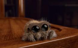 Khoa học bảo là đừng giết nhện, vừa bớt nghiệp sát sinh lại tốt cho hộ gia đình