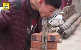 Chàng trai bị bại não vẫn cố gắng livestream nâng gạch bằng răng để kiếm sống nuôi gia đình