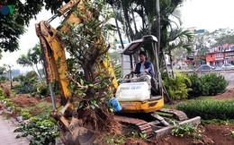 Ngày đêm chuyển cây, xén dải phân cách mở rộng vành đai 2, 3 ở Hà Nội