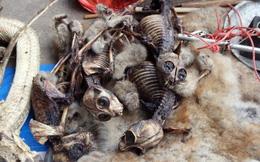 Cặp bạn thân mang xương khỉ, mật gấu lừa bán lấy hàng trăm triệu chỉ với cách đơn giản