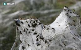 """""""Mưa nhện"""" xảy ra ở Brazil, các nhà khoa học nói gì?"""