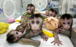 24h qua ảnh: Trung Quốc nhân bản vô tính hàng loạt khỉ